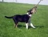 roztridit-17-5-2009-057