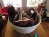 houby (3)