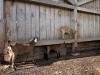 kozy-uvod