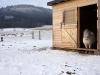 zima0115 (1)