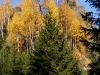 podzim-13.jpg