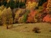 podzim-27.jpg