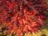 podzim-10