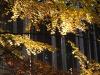 podzim-3
