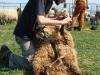 strihani-ovci