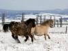 ponny (4)