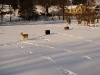 ovce-v-zime