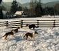 psiska-v-zime-8
