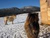 zimni-pastvina-2