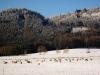 zimni-pastvina-4