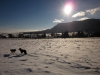 zimni-pastvina-5