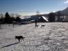 zimni-pastvina-6