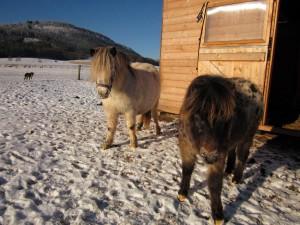 zimni pastvina (3)